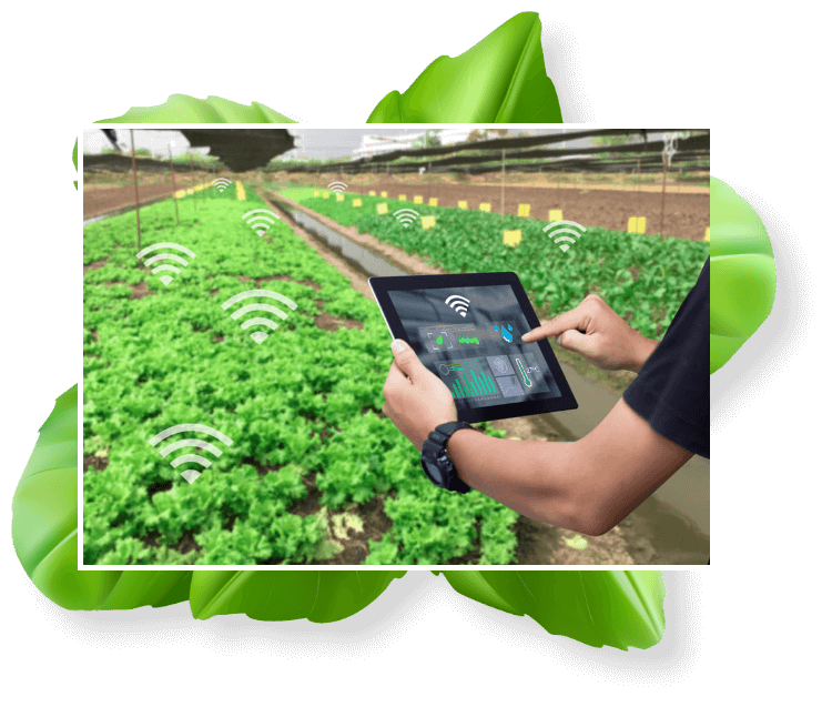 IOT Solutions For Farmers And Agriculture Industry
