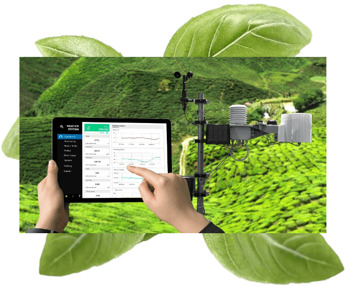 What You Can Do With IOT In Agriculture